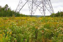Les travaux de la nouvelle chaire porteront notamment sur la lutte aux espèces envahissantes sous les pylônes électriques.