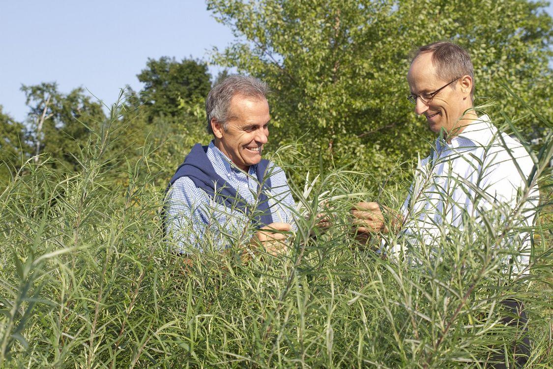 Aux racines de la r volution verte udemnouvelles - Depollution par les plantes ...