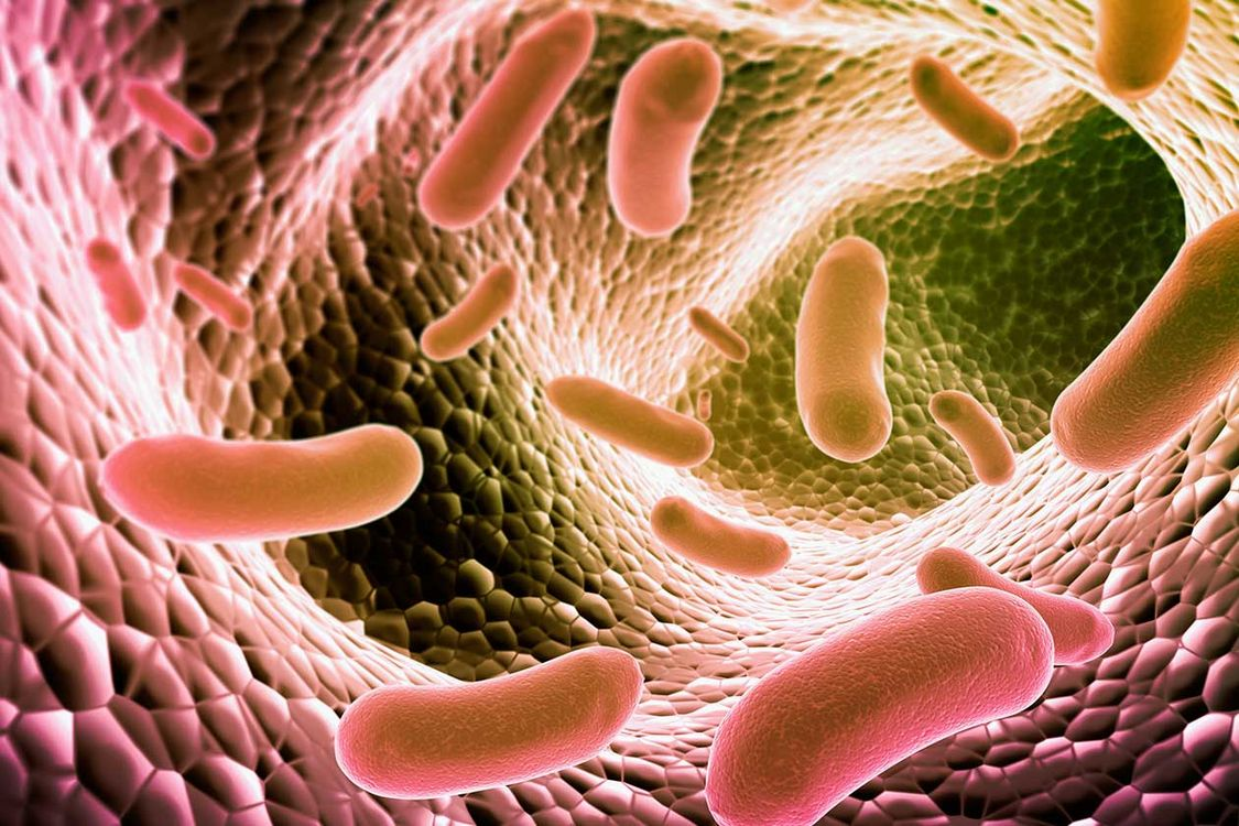 microbes in gut A johns hopkins expert explains how what's going on in your gut could be affecting your brain.