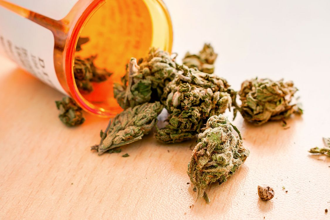 Cannabis Studium