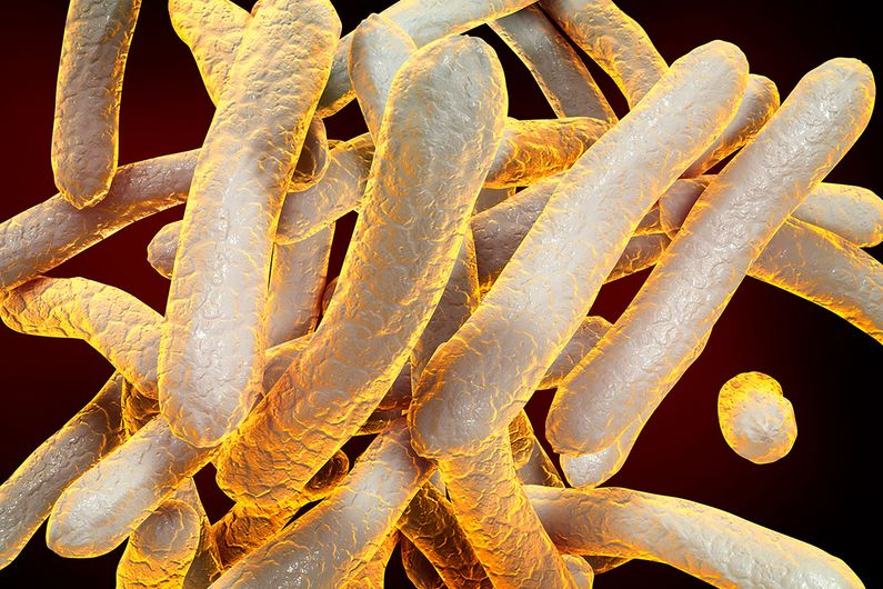 Mycobacterium tuberculosis, the bacterium that causes TB.