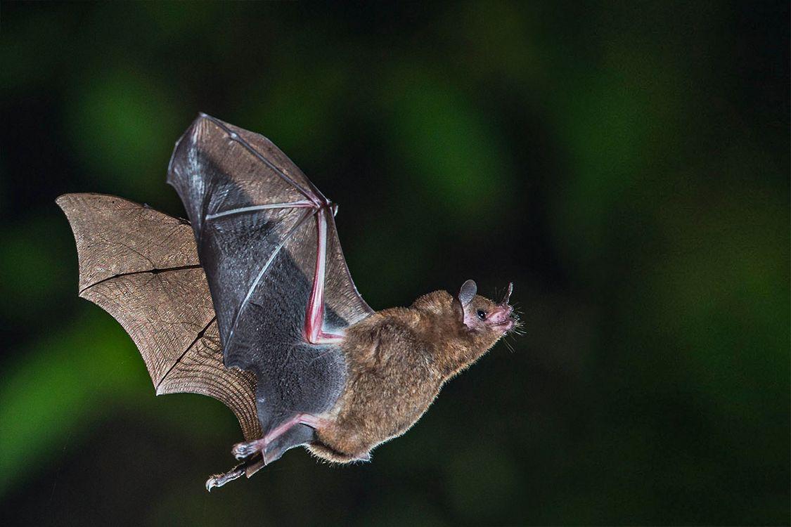 Julie Faure a cherché à documenter la relation particulière entre une  cinquantaine d'espèces de