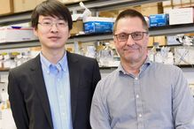 The first and senior authors of the study, Ning Wu and André Veillette.
